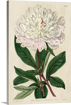 Imperial Floral I