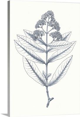Indigo Botany Study I