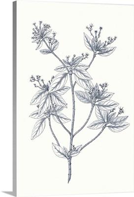 Indigo Botany Study III