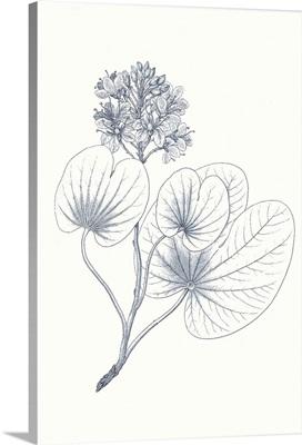 Indigo Botany Study IV