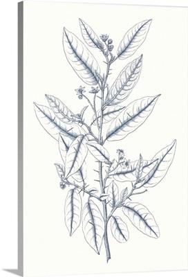 Indigo Botany Study V