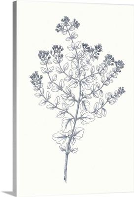 Indigo Botany Study VI