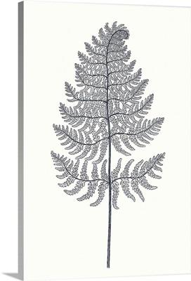 Indigo Botany Study VIII