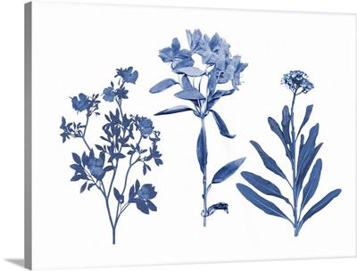 Indigo Pressed Florals II