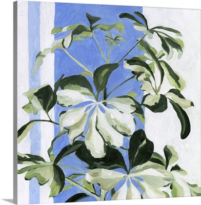 Indoor Plant II