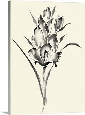 Ink Wash Floral II - Gladiolus