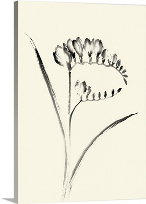 Ink Wash Floral VI - Freesia