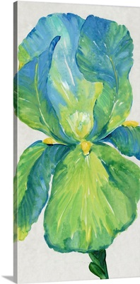 Iris Bloom In Green I