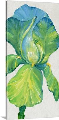 Iris Bloom In Green II