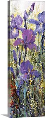 Iris Field I