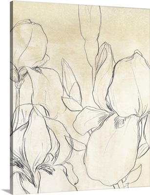 Iris Garden Sketch I