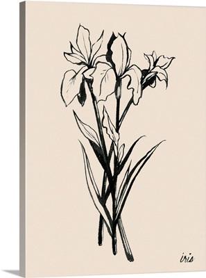 Iris Sketch II