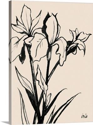 Iris Sketch III