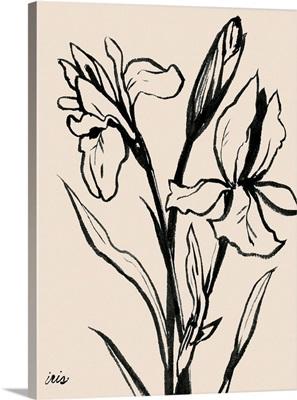 Iris Sketch IV