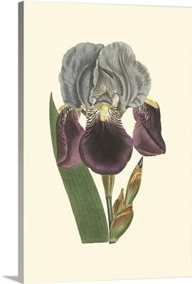 Iris Varieties I