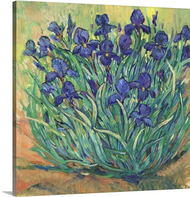 Irises In Bloom I