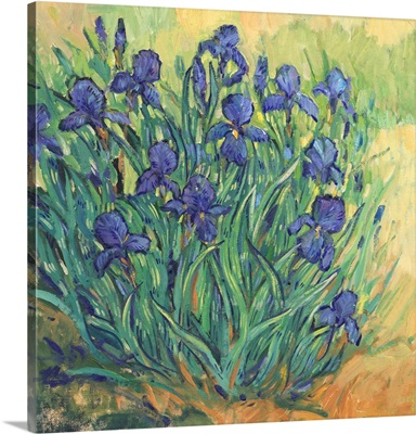 Irises In Bloom II