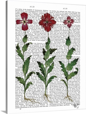Italian Carnation I