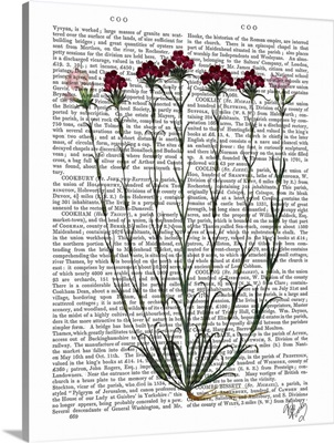 Italian Carnation IV