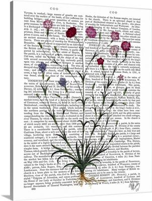 Italian Carnation V