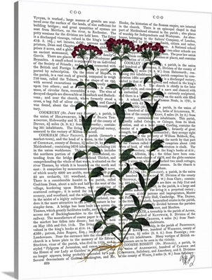 Italian Carnation VI