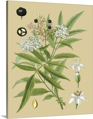 Ivory Blooms I