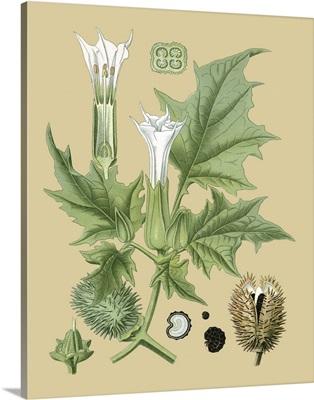 Ivory Blooms II