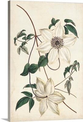 Ivory Garden II