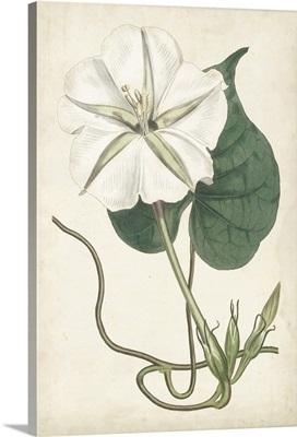 Ivory Garden III