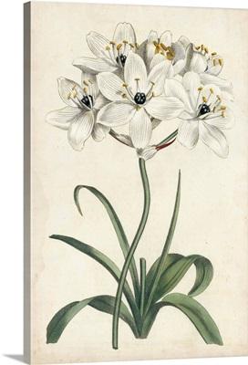 Ivory Garden V