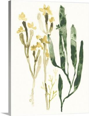 Kelp Collection IV