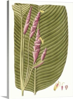 Leaves of the Tropics I