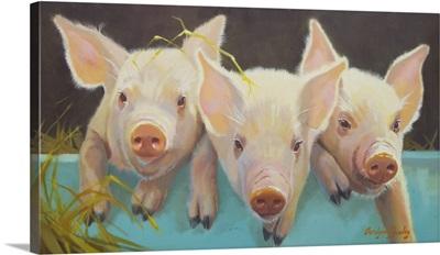 Life as a Pig I
