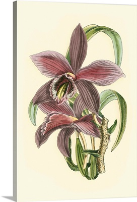Lilac Orchid I