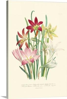 Lily Garden I