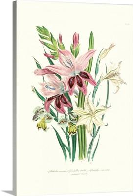 Lily Garden II