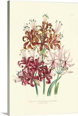 Lily Garden III