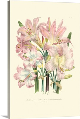 Lily Garden IV