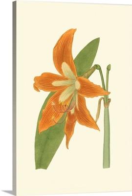 Lily Varieties II