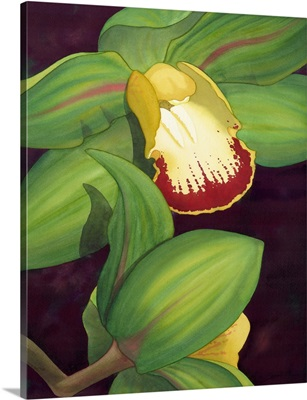 Lime Orchid II