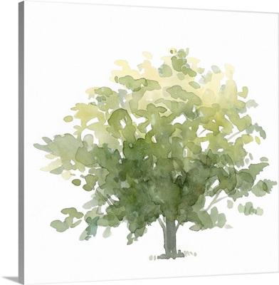 Lonely Oak I