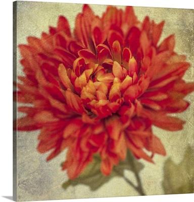 Lush Vintage Florals III