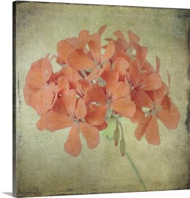 Lush Vintage Florals IX
