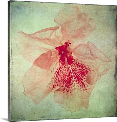Lush Vintage Florals VI