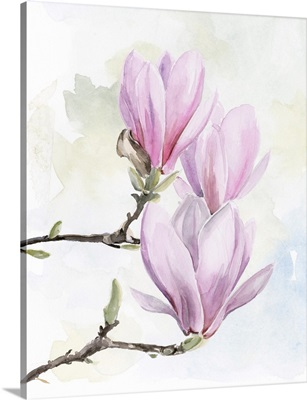 Magnolia Blooms I