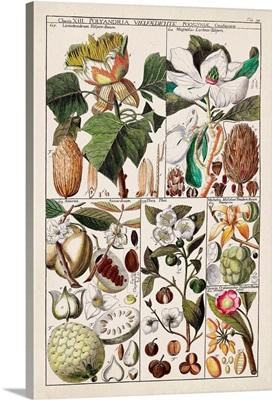 Magnolia Chart