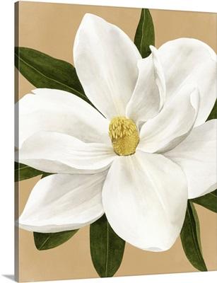 Magnolia On Gold I