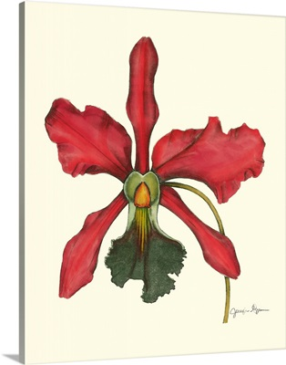 Majestic Orchid IV