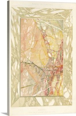 Marble Varieties VIII