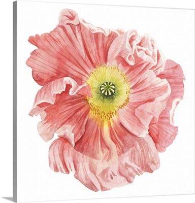 Market Poppy I